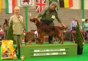 Lordly Undine Best Veteran ISC Belgium