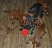 puppies + Ines