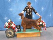 Best IS Veteran Dog March 1 2008 WKC Milwaukee