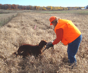 Lacey's 1st Pheasant