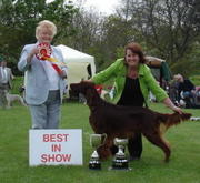 Best in Show and now a Jersey Champion!!!!
