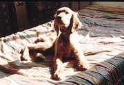 James - puppy