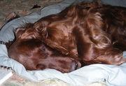 Sleepy Brea