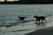eveningswim on my beach