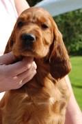 Puppyhead, seven weeks old!