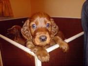 please take me home!