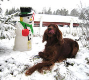 Winther and snow