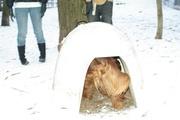 eskimo timmy in Igloo