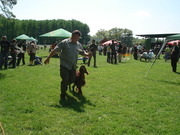 Slovak Pointers & Setters Club Show