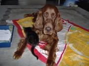 Laila and Shadow