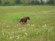 savannah in the field