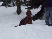 quincy in the snow