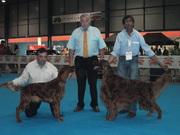 Exp Canina Galega 2009