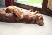 Holly and Alfie chillin