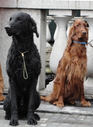Vita and her doggy friend