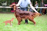 Jarlaith jonge hondendag club september 2011