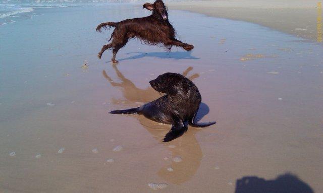 jimmy (marlland quarter back)10-11 jimmy en zijn vriend het zeehondje
