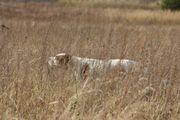Redmore Bright Diamond in the field