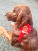 1st place in most handsome male today at doggy show :))))) My handsome boy!!