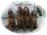 Sheena , Eddie , Abbey & Lily
