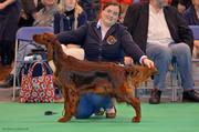 """Crufts 2013 - Riverwood Kumbayah """"Penny"""" 3th in Special Junior Bitch"""