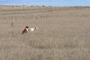 ISCV Open Field Trial 2013 158