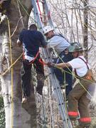 Man Stuck in Tree