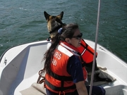 K9 water search training