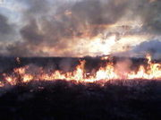grassfire2