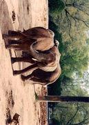 Jackson Zoo Kodak moment !