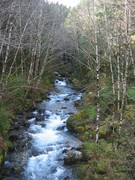 Goat Creek in the Spring