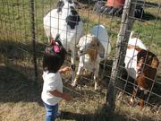 Saturday- Dewberry Farm
