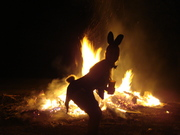 bunny tail silhouette 2010