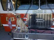 Pryse- Search and Rescue Dog