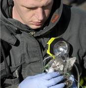 Fire and kitten