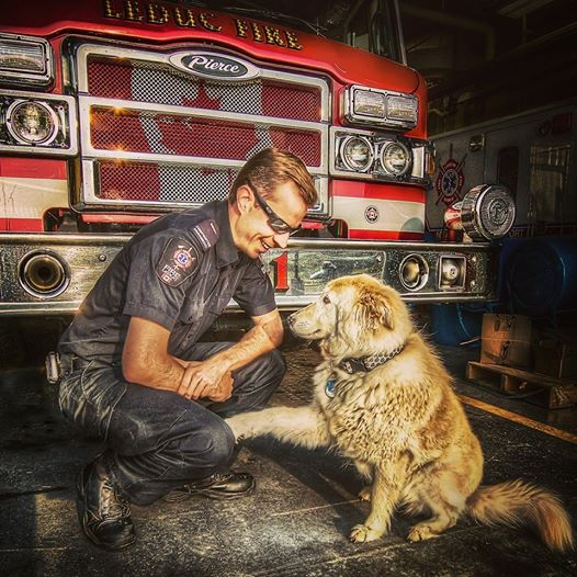 FIRE DEPT DOG