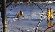 New Brunswick Moose Rescue