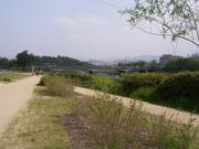 Kamogawa 10Km race in Kyoto