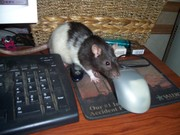 Are You Sure You're a Mouse?