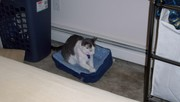 Missie Ann and her bed