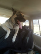 Maya loves to ride ...lol
