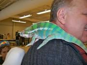 Johnny and Chameleon