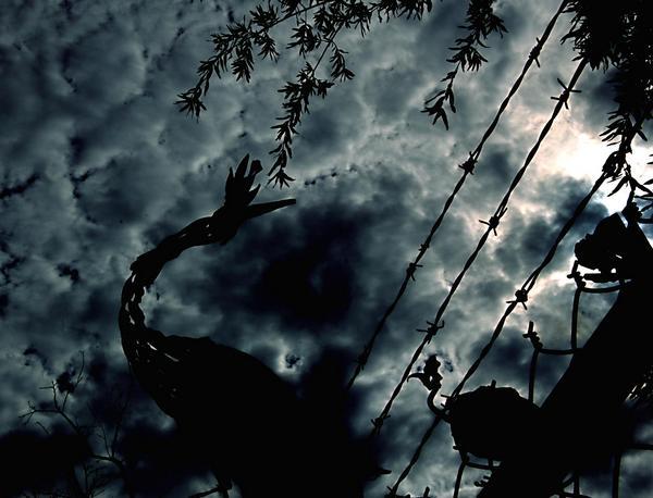 Barbwire sky