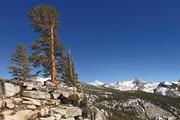 California Serendipity Andreas M Cohrs Sierra Nevada