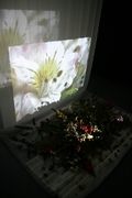 A Space of Flowers - Installation