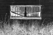 Urban Window