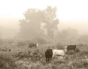 Pasture BW