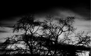 Darkness' calls