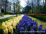 ชมสวนดอกไม้ที่สวยที่สุดในโลกในประเทศ Netherlands