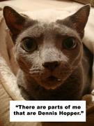 Dennis Hopper Cat